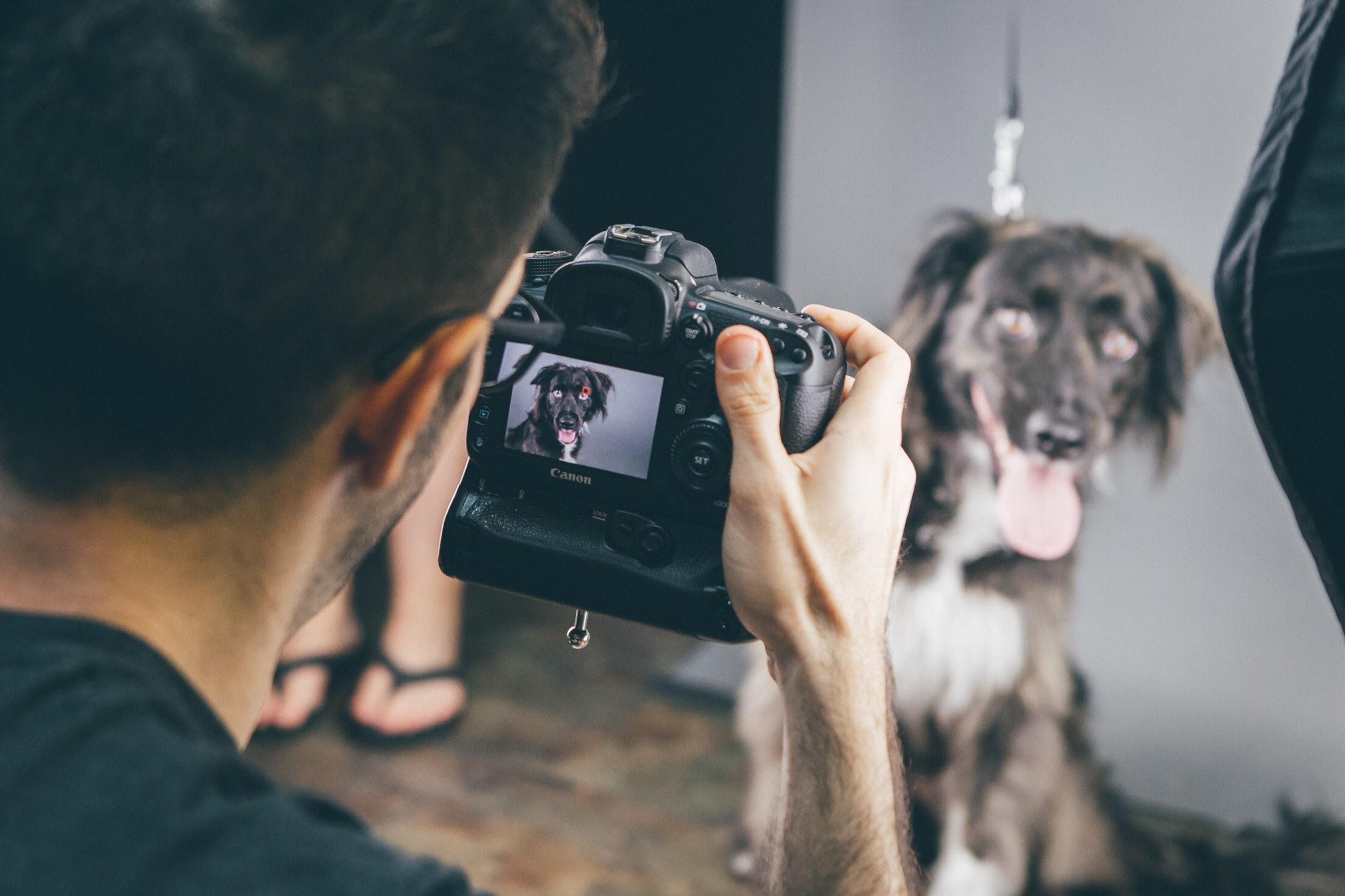 عکاس حیوانات خانگی