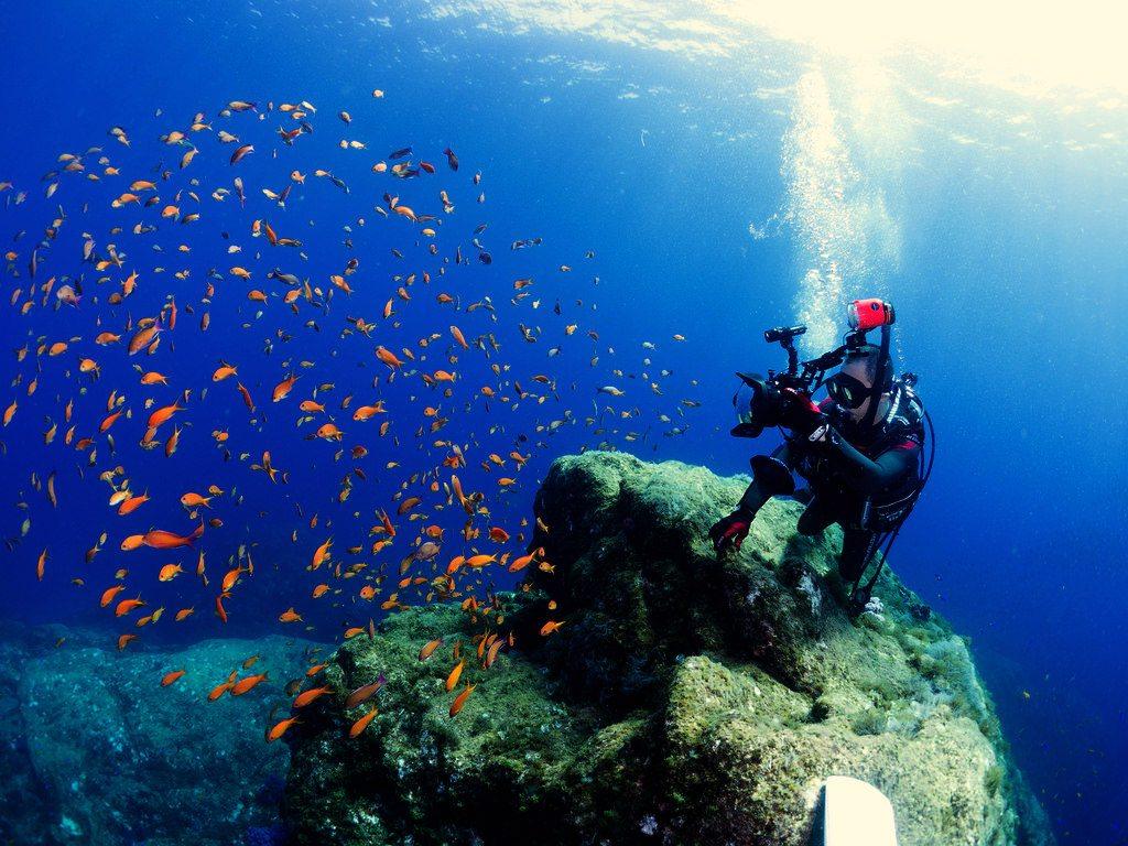 عکاس زیر آب