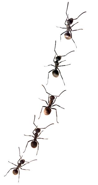 در محتوای تبلیغاتی نباید لشکری از مورچه ها جلوی چشم مخاطب رژه برود!