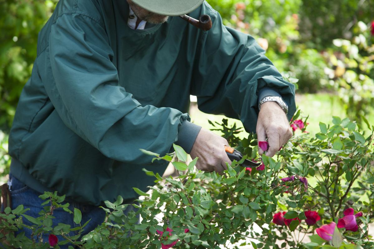نویسنده محتوا باید شاخ و برگ های اضافی را هرس کند