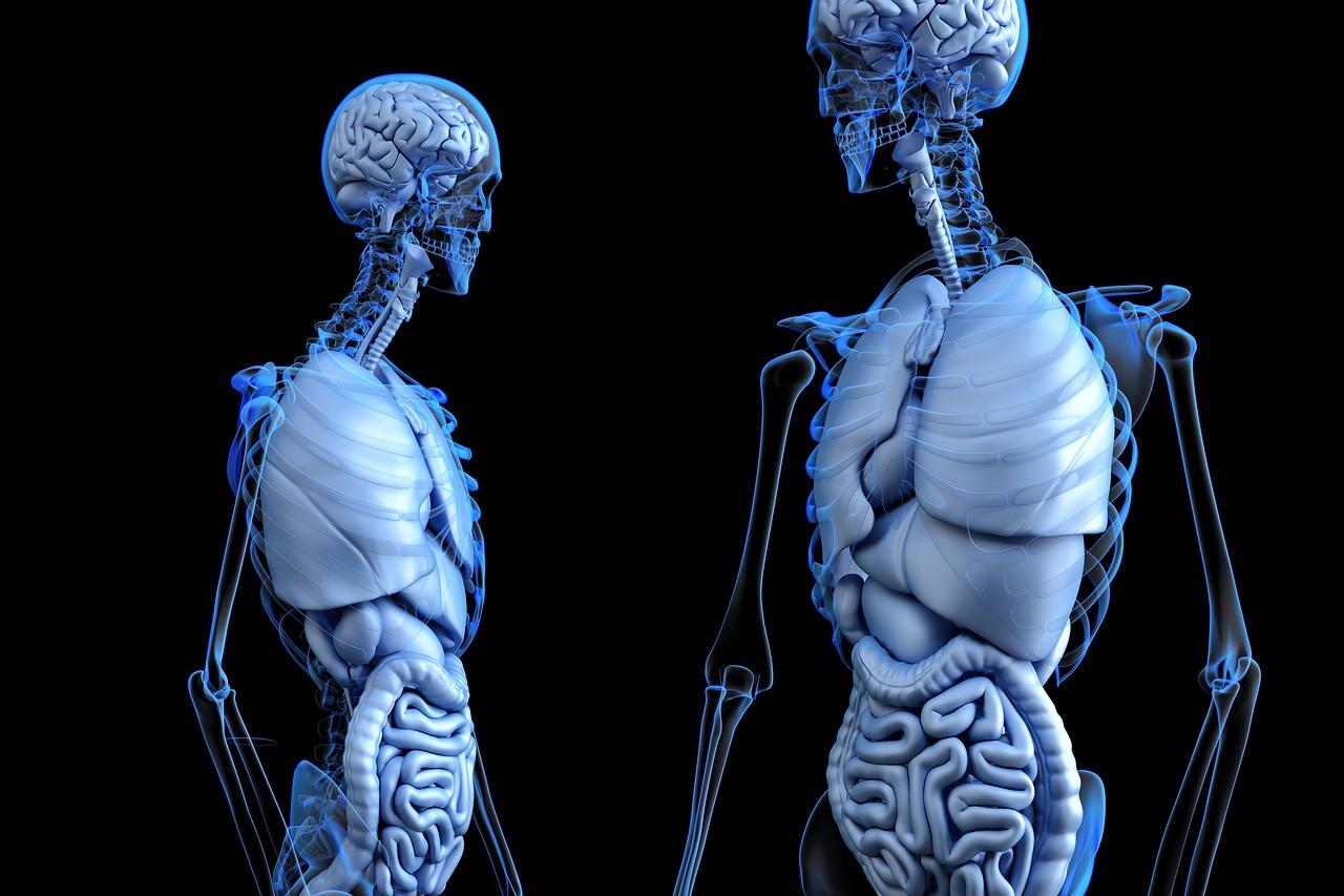 دانلود تصاویر رایگان برای تولید محتوا در زمینه پزشکی
