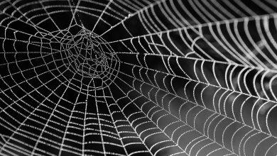 ۱۰ نحوه عنوان نویسی در ساخت محتوا به نحوه تار عنکبوتی  ( نحوه ۳ و ۴ را یقینا انجام دهید ) 37